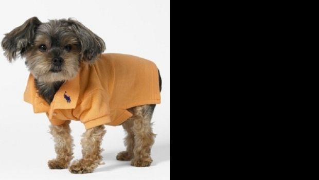 Perros fashion: Diseñadores lanzan ropa para mascotas