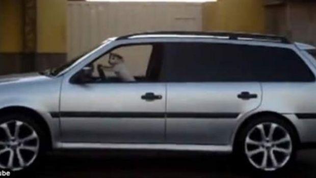 ¿Un perro conduciendo un coche?