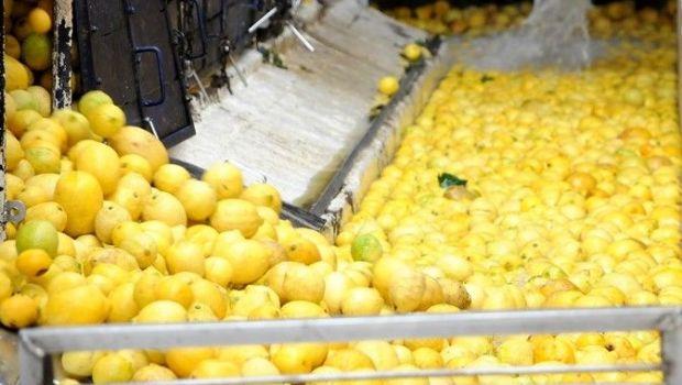 Los limones tucumanos serán exportados a Colombia