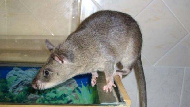 La mamá se fue de fiesta y ratas devoraron a su bebé de 3 meses