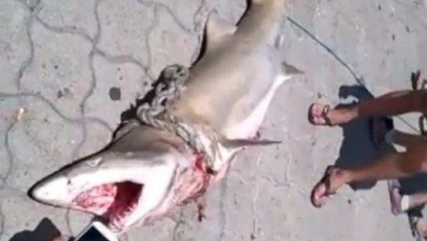 Mar del Plata: apareció un tiburón en el puerto