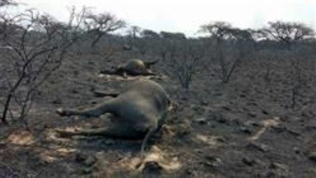 Se quemaron unas 800.000 hectáreas en tres provincias