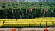 Acuerdan un plan de trabajo para exportar limones del NOA a EEUU