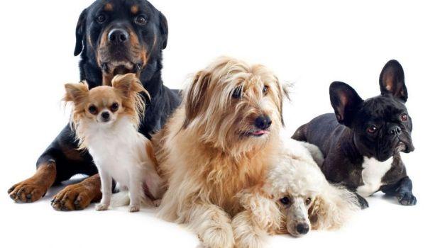 Los perros entienden lo que los humanos les dicen