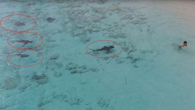 Así un niño se salvó de ser devorado por cuatro tiburones