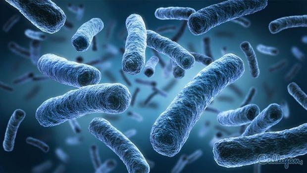 Los virus y las bacterias caen del cielo