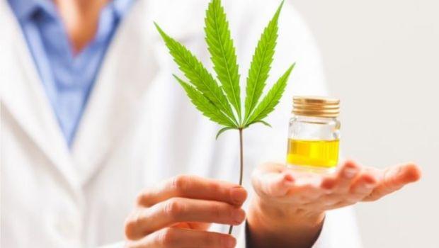Los beneficios del aceite de Cannabis que lo volvieron tan popular