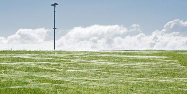 Telaraña gigante cubre campo de fútbol — Aterrador