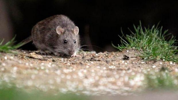 Dos nuevos casos de Hantavirus confirmados en la Patagonia
